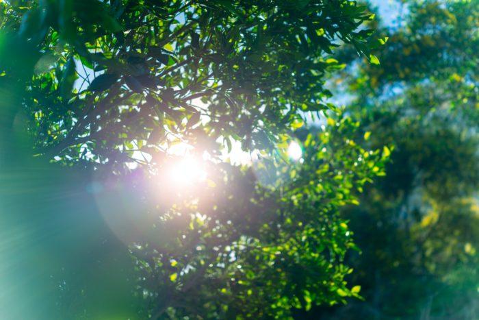 Fresh green tree foliage
