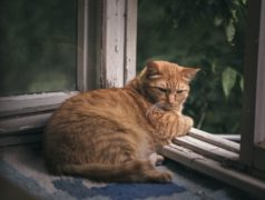 Ginger cat relaxing on a balcony