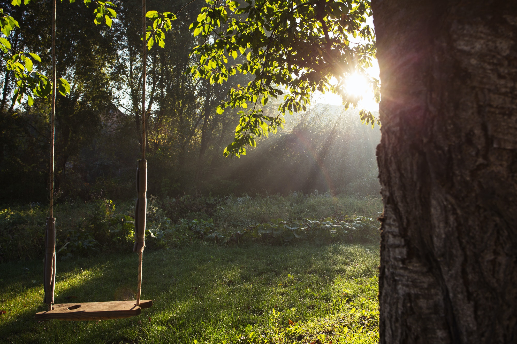 早起きは三文の徳。決まった時間に起きよう、とあらためて思った日。